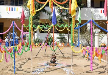 Pongal celebrations 2019
